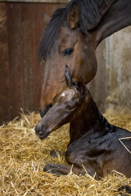 foal-coming-everything-you-need-to-know
