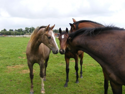 growing-foal-feeding-advice-young-horses