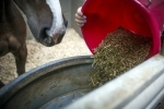 The-basic-feeding-requirements-for-your-horse